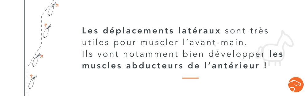 l'utilisation des déplacements latéraux pour développer la musculation de l'avant-main du cheval