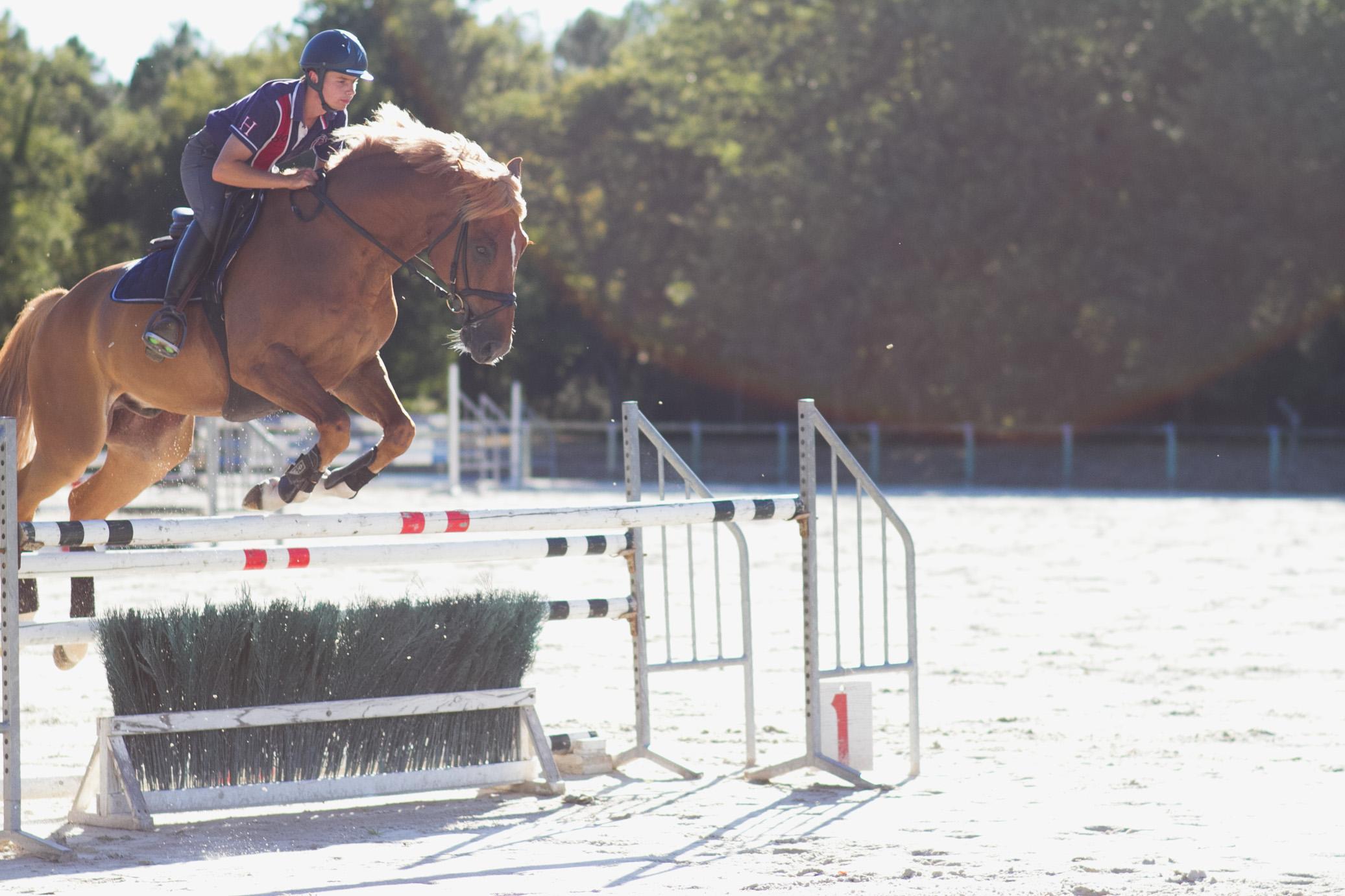 Training Pferd