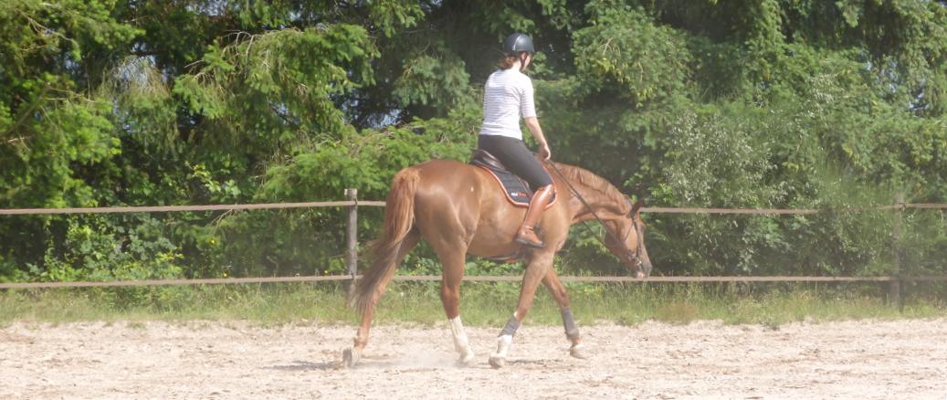 récupération après l'effort chez le cheval
