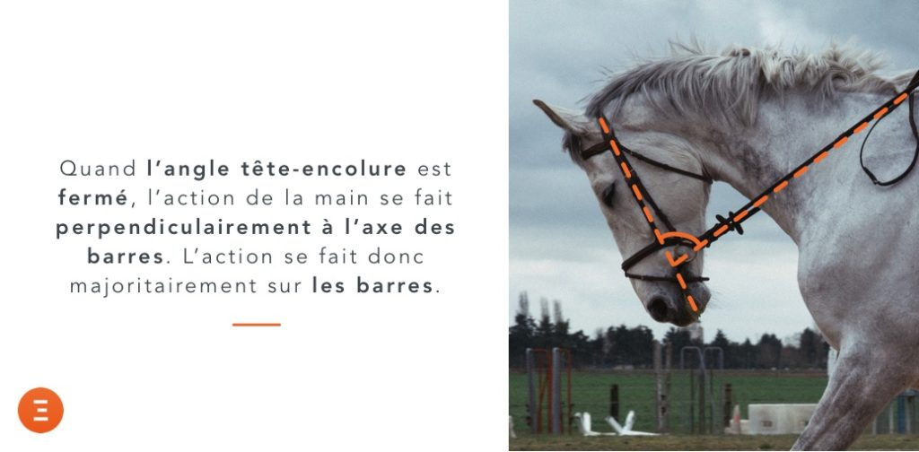 action sur les barres d'un mors simple cheval
