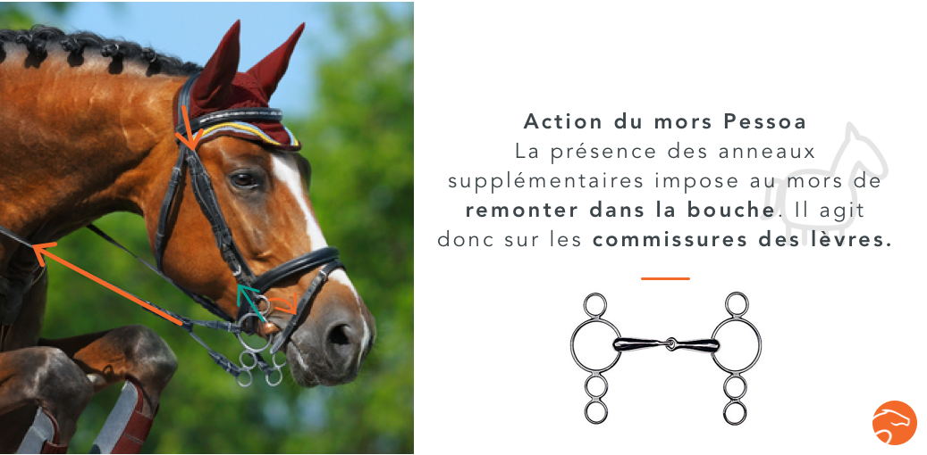action mors cheval pessoa