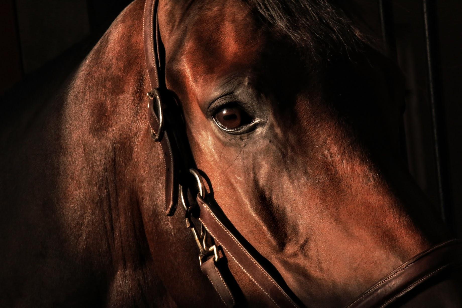 Sicht des Pferdes