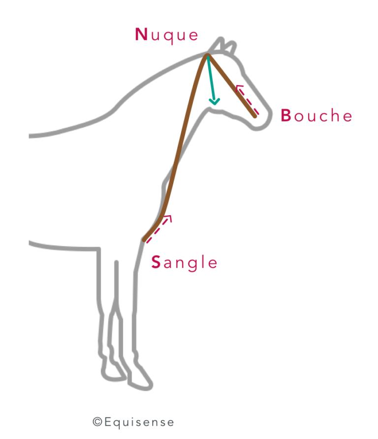 chambon enrênements cheval