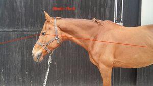 Toter Winkel Pferd