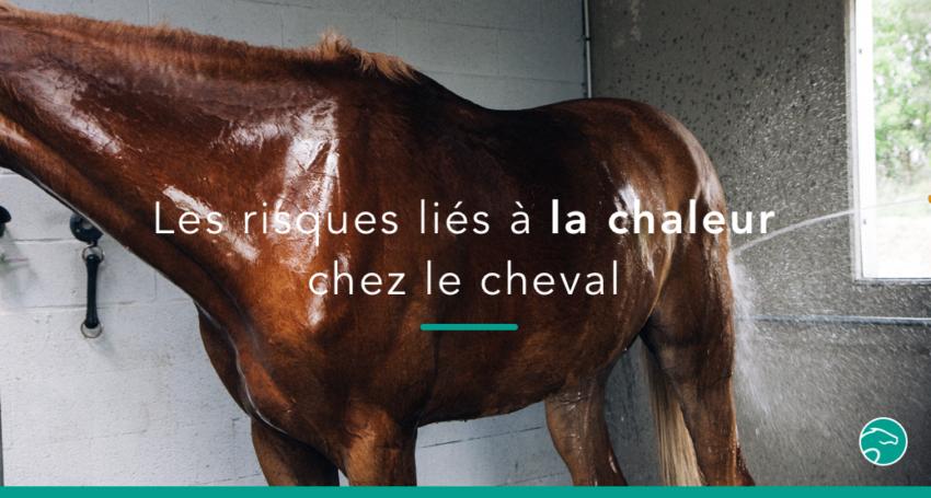 Comment réagir face à une déshydratation du cheval ...
