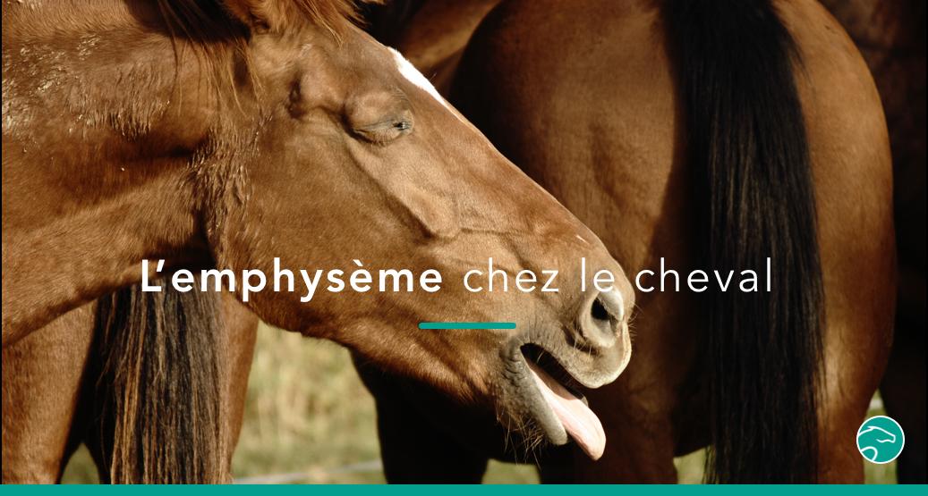 emphysème cheval