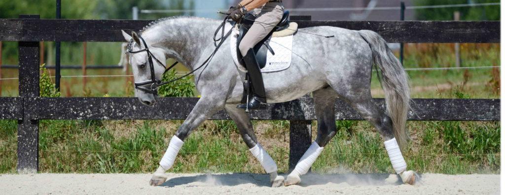 muscles encolure cheval musculation de l'encolure