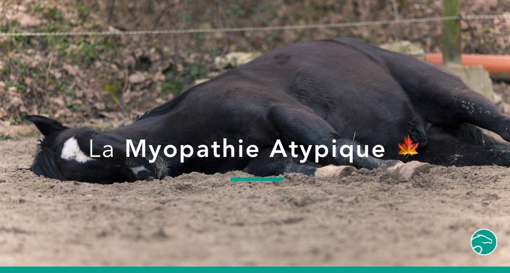 myopathie atypique cheval