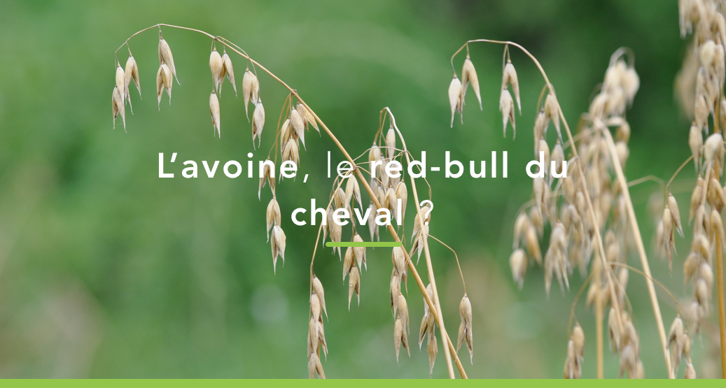 avoine cheval