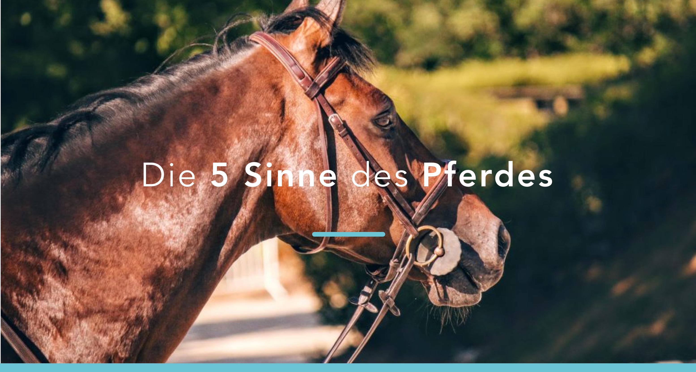 5 Sinne des Pferdes