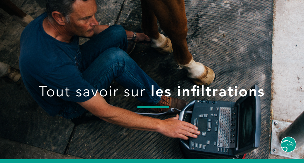 infiltrations cheval