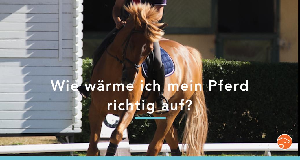 Aufwärmphase_Pferd_Titel