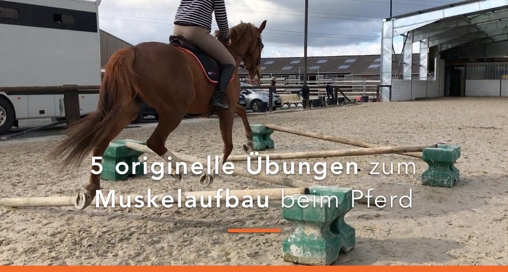 Muskelaufbau beim Pferd - 5 einfache Übungen