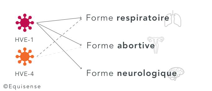les 3 formes de la rhinopneumonie équine