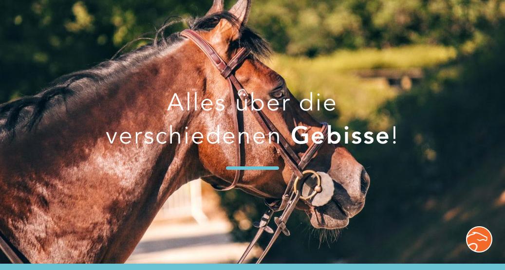 Titel_Pferd_Gebiss