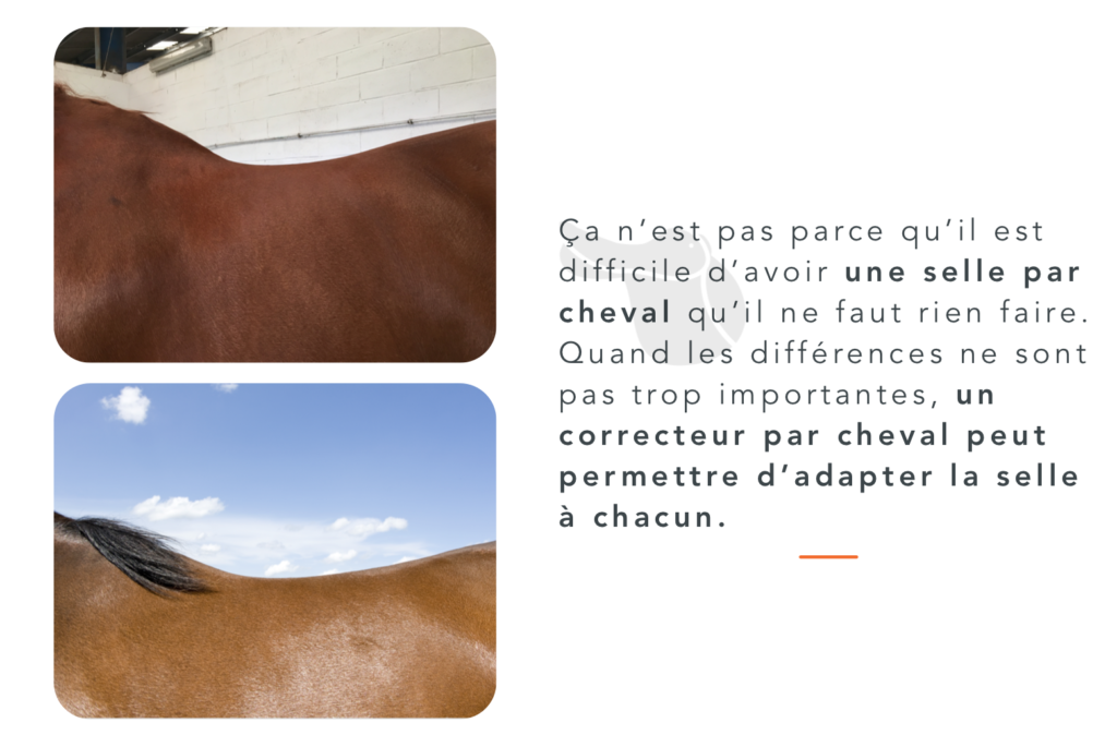 dos cheval amortisseurs selle