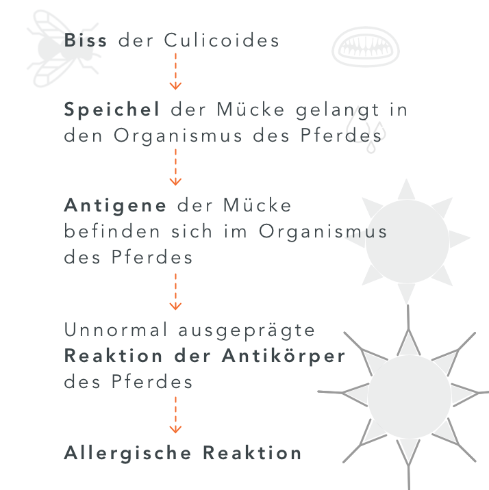 Schema der allergischen Reaktion beim Ekzemer