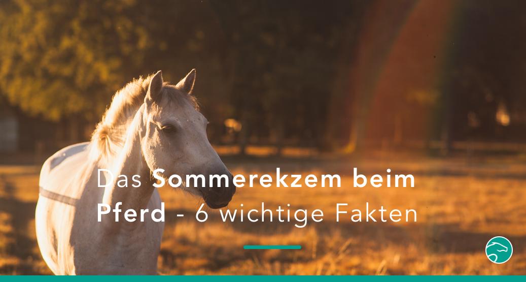 6 Fakten zum Sommerekzem beim Pferd