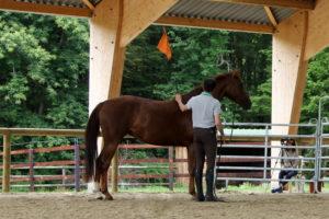 débourrage cheval débourrer son cheval