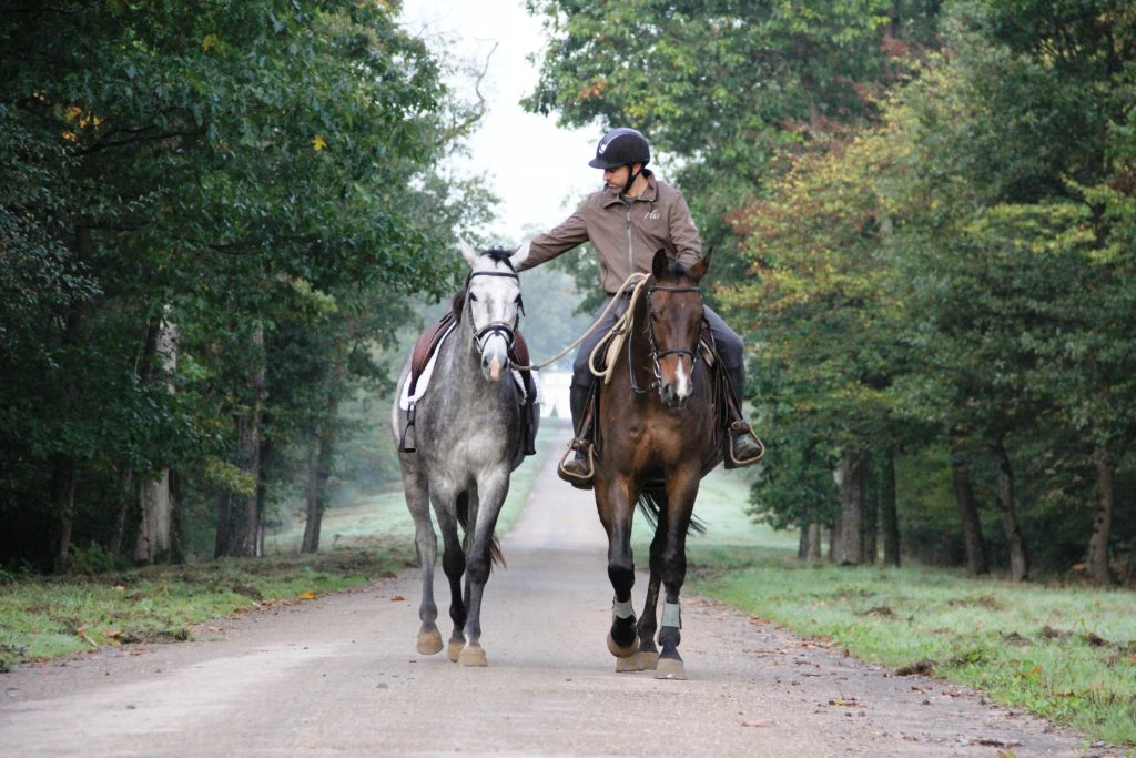 débourrage du cheval avec l'utilisation de la technique du ponying