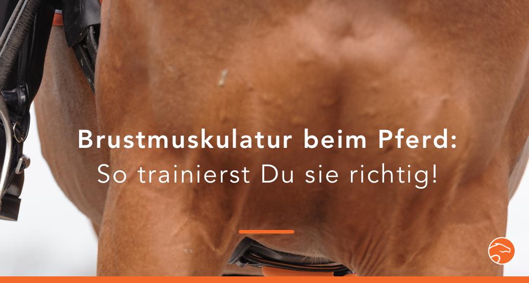 Alles zur Brustmuskulatur beim Pferd