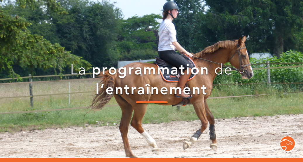 entrainement cheval