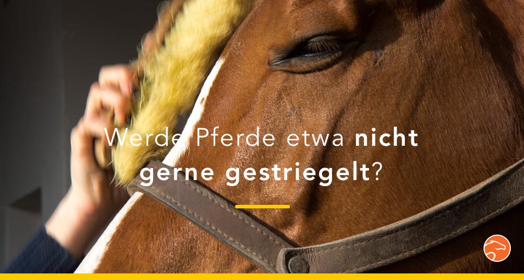 Was Pferde wirklich vom Putzen halten