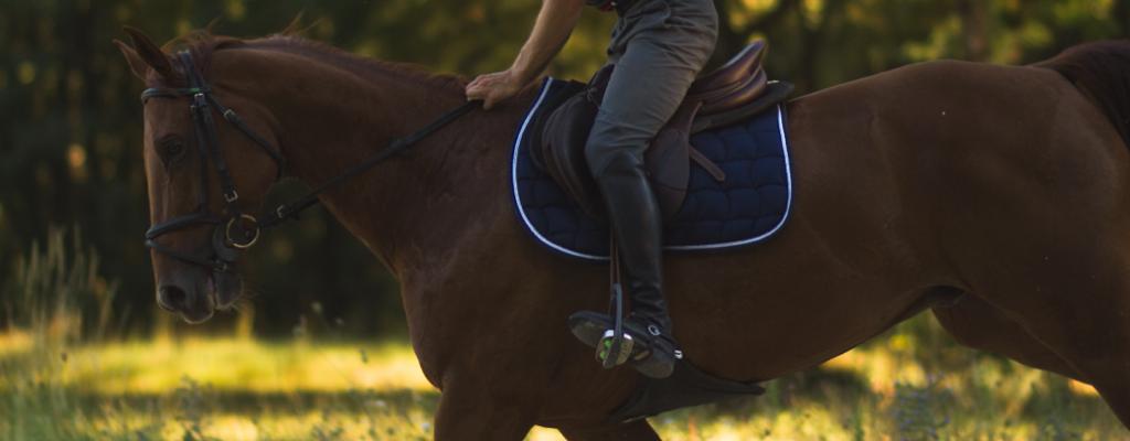 programmer l'entrainement de son cheval