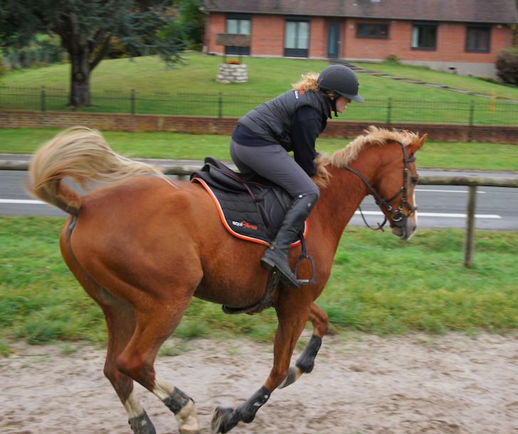 Fall vom Pferd - Angst beim Reiten