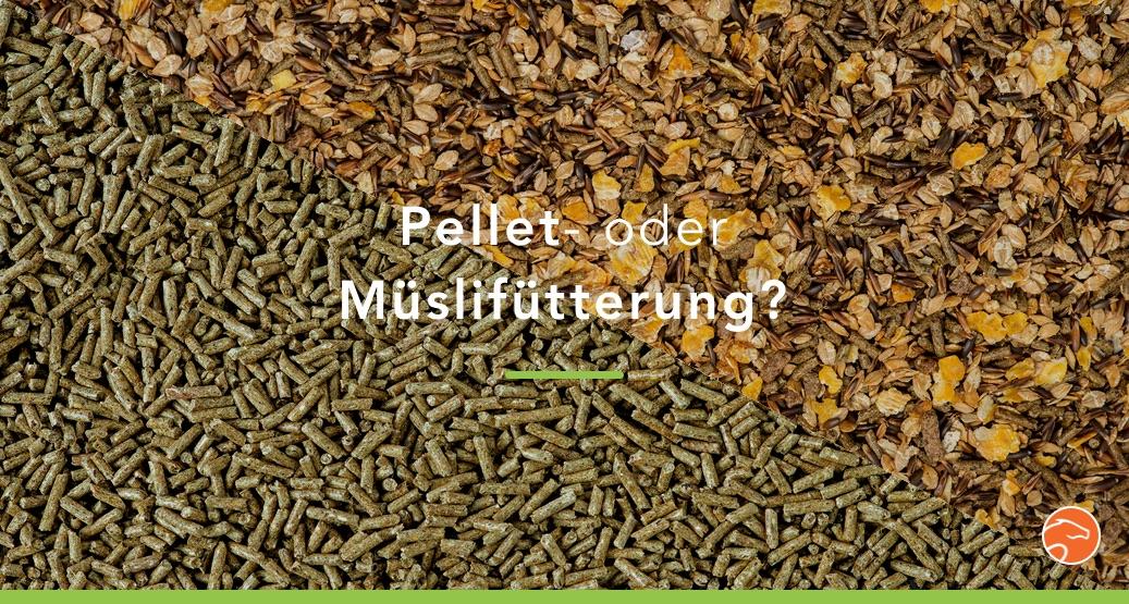 Header_Pallets_Muesli_Fütterung_Pferd