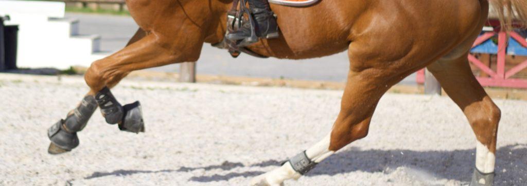 membres d'un cheval au galop