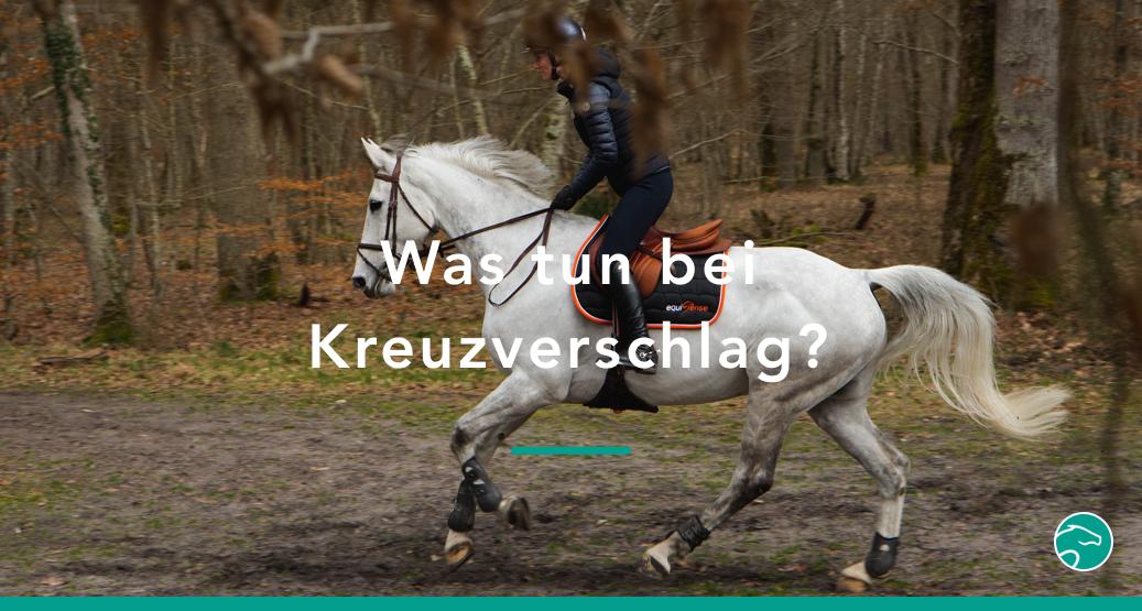 Titel_Kreuzverschlag_Pferd