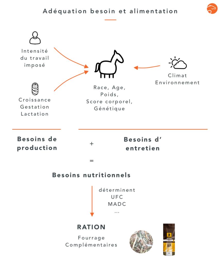 méthode pour calculer la ration de son cheval