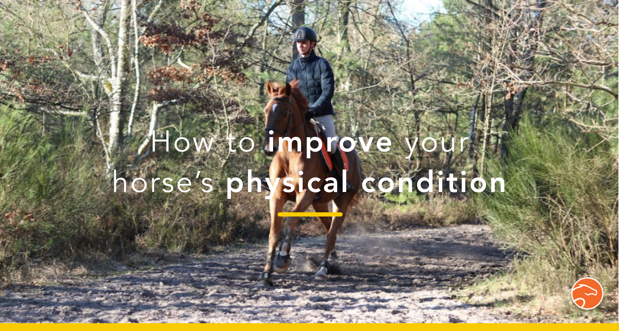 fitness_horse_header_physical_condition