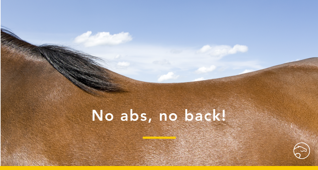 horse back muscles abs