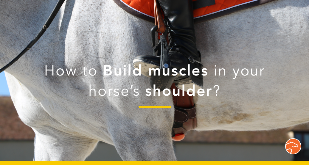 horse shoulder muscles