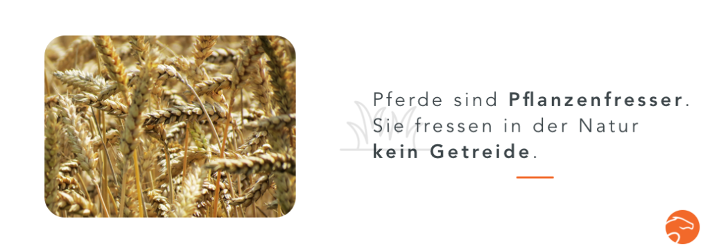 Pflanzenfresser_getreidefreies_Pferdefutter