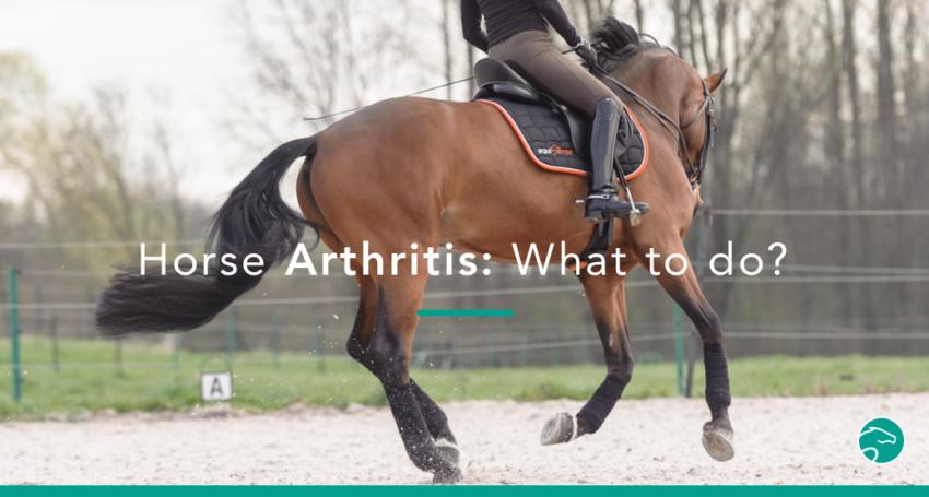 arthritis horse