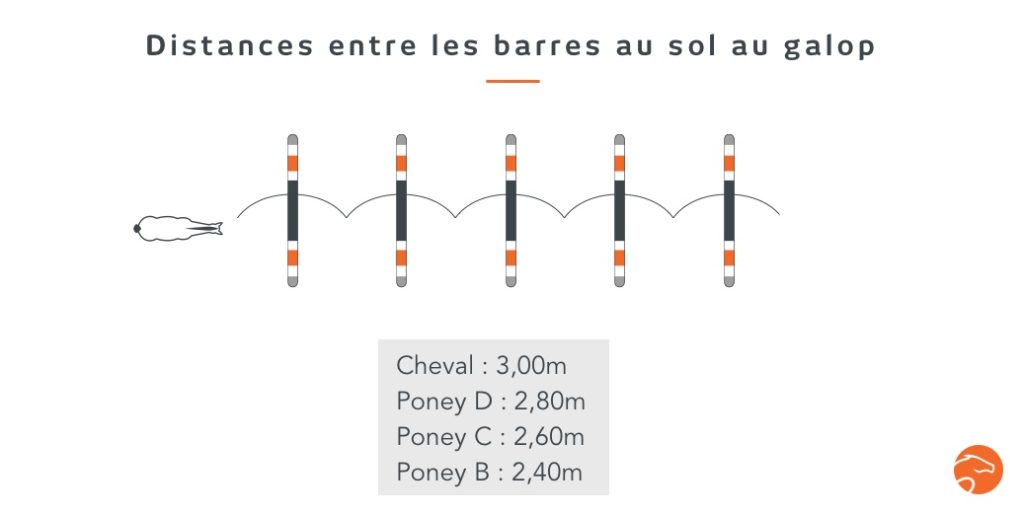 distances entre les barres au sol au galop