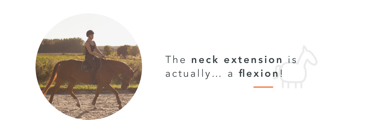 neck extension