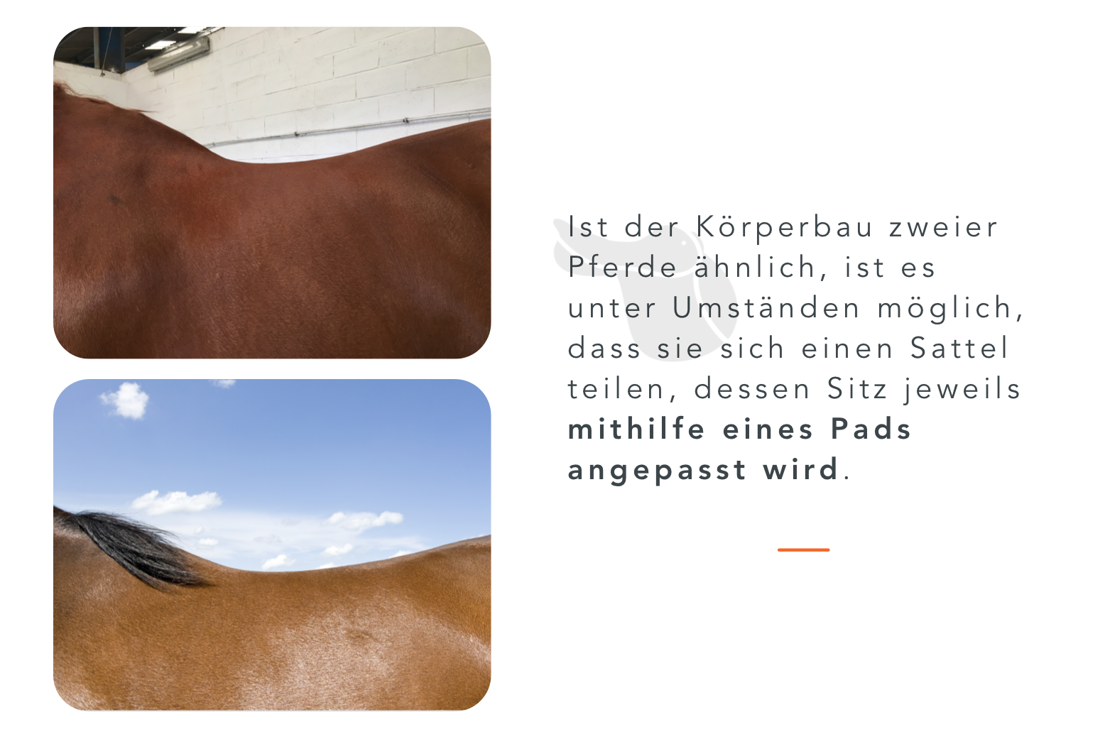Sattelpad_Pferd_teilen_2