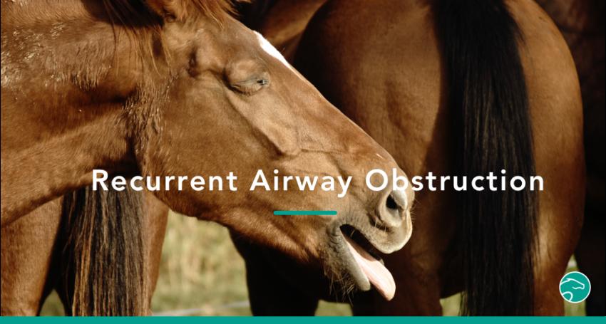 emphysema_horse