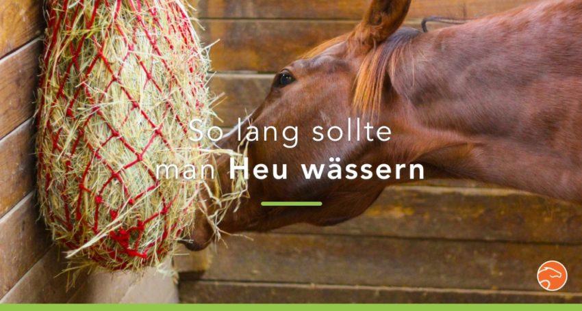 Header_Wässern_Heu_DE