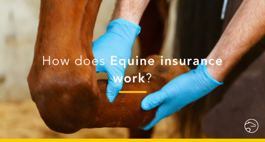 Equine_insurance