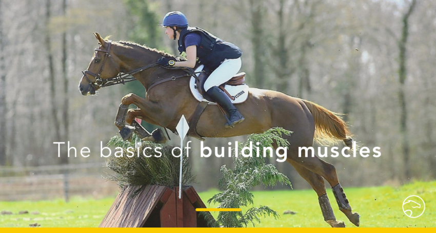 Basics of building muscles on horses