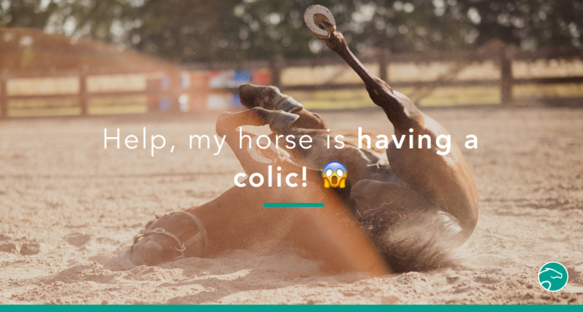 Horse_colic