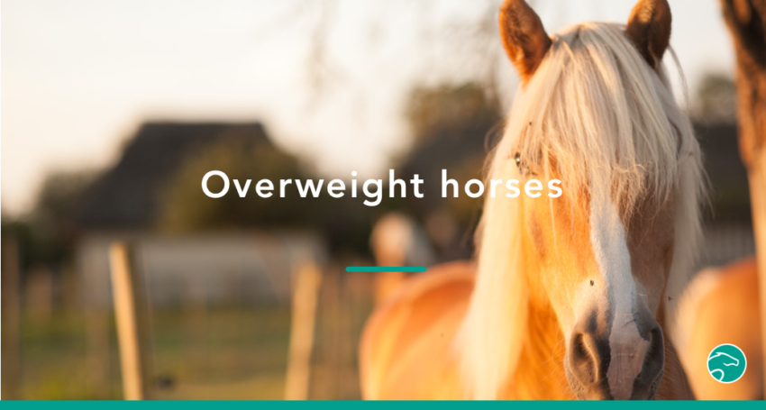 Overweight_horse