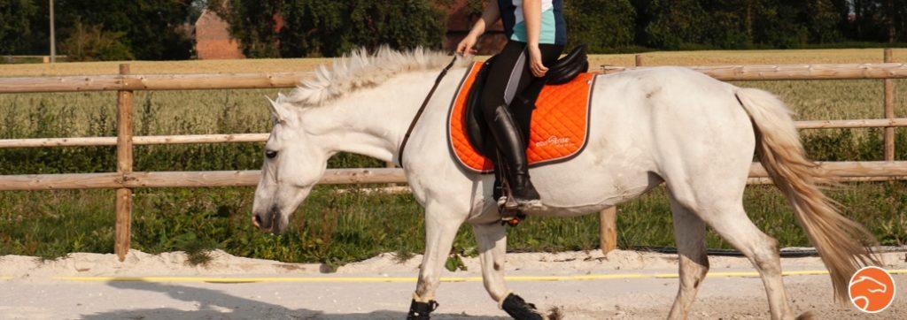 monter son cheval en cordelette grâce à l'éthologie et à la théorie de l'apprentissage