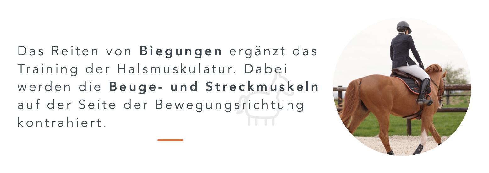Halsmuskulatur_Biegung_DE