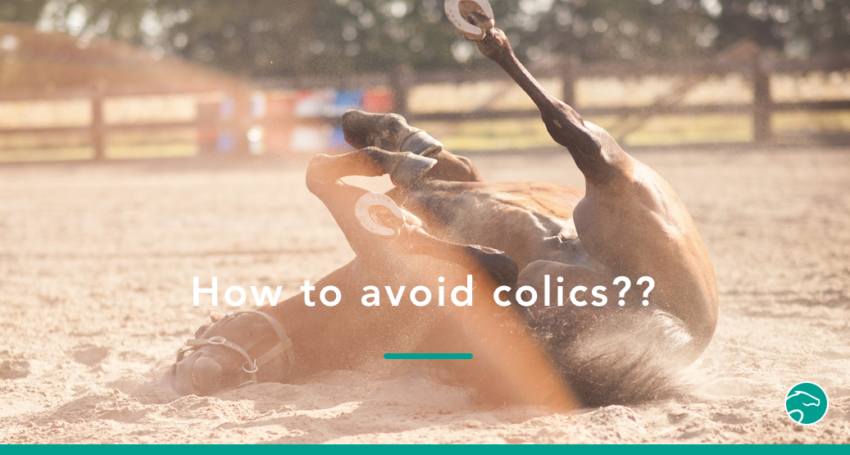 Preventing_horse_colics